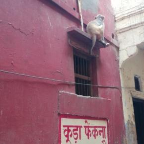 Varanasi - Monkey